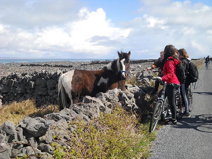 2c_Irland_2016